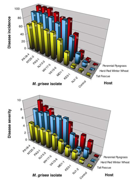 Incidence (en haut) et intensité (en bas) du Gray Leaf Spot sur raygrass anglais, fétuque élevée et blé