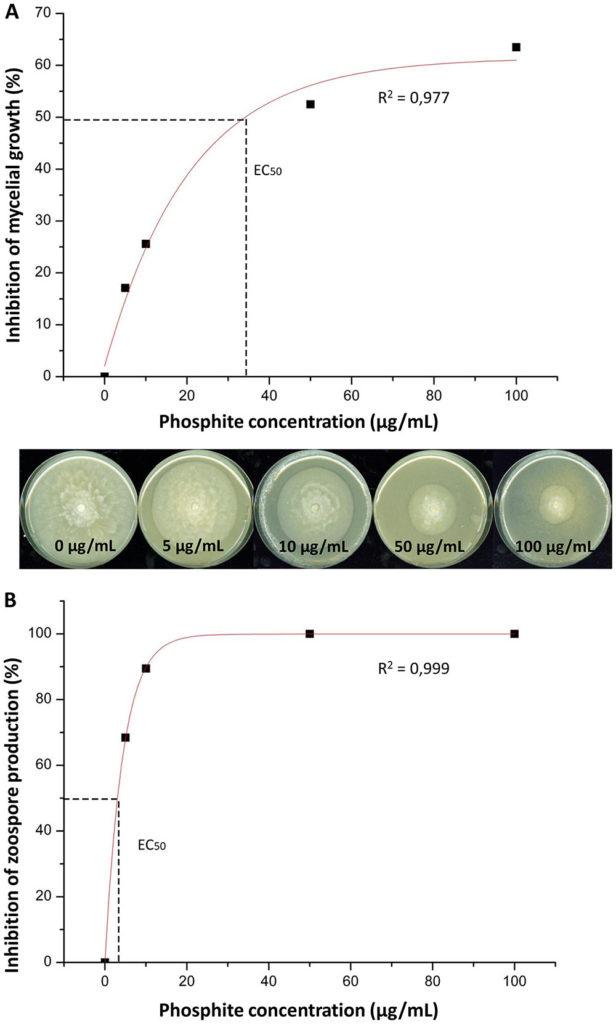 Effet de différentes concentrations de phosphonates sur la croissance mycélienne de Phytophtora (A) et sur la production de zoospore (B). Courbes d'inhibition en fonction de la concentration testée et illustration du EC50.