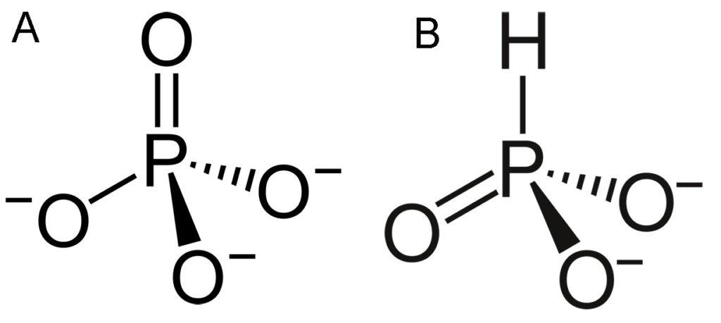 Formules chimiques du phosphate (A) et phosphites (B). Des formules similaires mais des propriétés totalement différentes